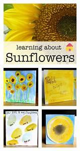 How to grow sunflowers with children - NurtureStore