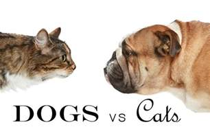 dogs vs cats stories on stage dogs vs cats su teatro cultural and