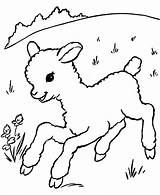Coloring Animal Pages Sheeps Sheep Lamb Animals Printable Colouring Farm Sheet Easter sketch template