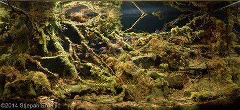biotope aquascape 2014 aga aquascaping contest 527