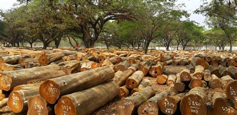 indonesian woods furniture saillant