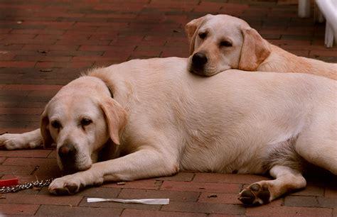 most popular dog breeds 2021 usa