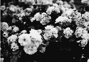 Black and white flowers tumblr theme