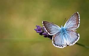 Butterfly, Hd, Wallpapers