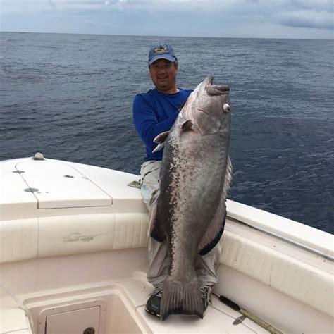 grouper gag fishing carolina ng bigger pointclickfish anthony alex
