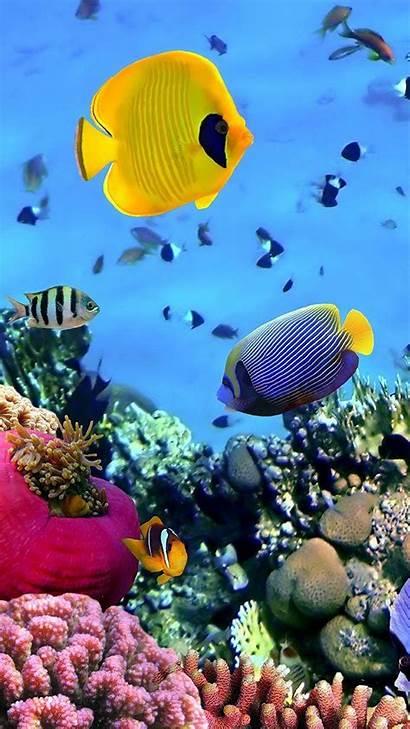 Fish Ocean Aquarium Animated Animals Backgrounds Sea