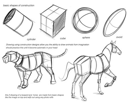 drawing animals tutorials art reference   draw animal