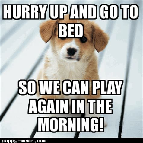 Adorable Meme - adorable puppy memes image memes at relatably com