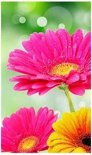 Bright Flowers Wallpaper - WallpaperSafari