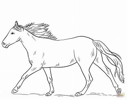 Coloring Horse Pages Running Printable Drawing Colorings