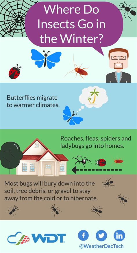 cold insects winter bugs weather go spoiler alert kill actually