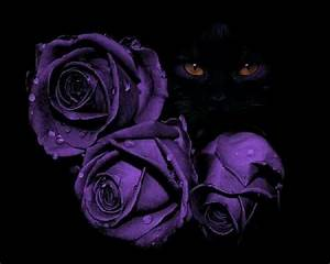 Black cat Purple Roses | Purple | Pinterest