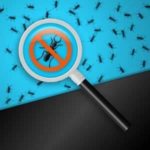 Ameisen Im Haus Ursache : ameisen bek mpfen ameisen im haus hausmittel gegen ~ A.2002-acura-tl-radio.info Haus und Dekorationen