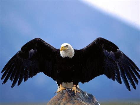 размах крыльев птицы 1600х1200 обои для рабочего стола