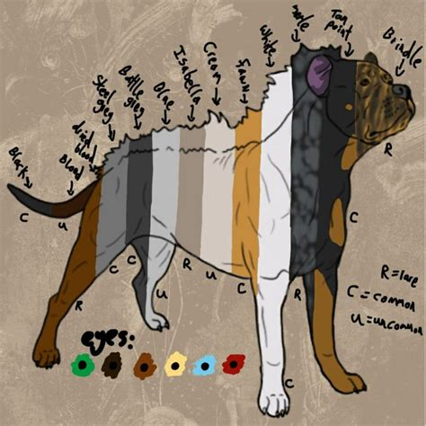 pitbull coat colors so many animals