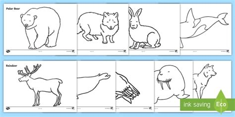 Arctic Animals Colouring Sheets