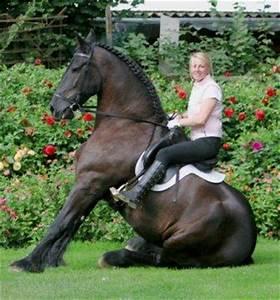 Bilder Von Pferden : das sitzen zirkuslektion ~ Frokenaadalensverden.com Haus und Dekorationen