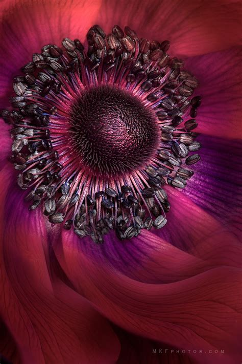 Inside The Anemone Please Click On Image To View On