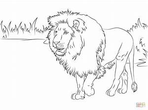 Gorgeous Lion Coloring Page Free Printable Coloring Pages