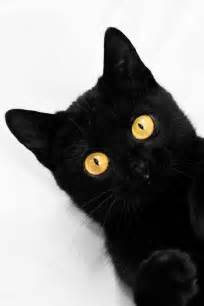 Yellow Black Cat with Amber Eyes
