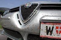 Fliegen Vom Auto Entfernen : tip insekten vom auto entfernen service ~ Watch28wear.com Haus und Dekorationen