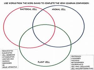 Oc 3632  Animal Cell Diagram Plant And Animal Cell Wiring
