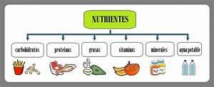 Guía Práctica de Los 5 Grupos Básicos de Alimentos para Niños en edad Escolar