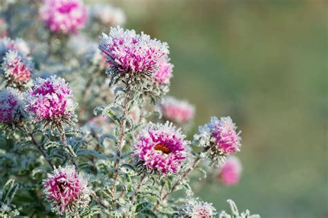 i fiori di bach a cosa servono fiori d alaska cosa sono e a cosa servono alchimia
