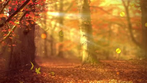 stock video  fall background  autumn colors light