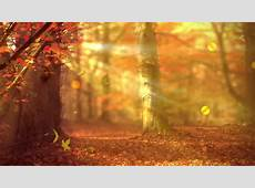 Stock video of fall background with autumn colors, light