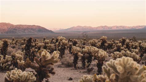 Download Wallpaper 1920x1080 Desert Cacti Mountains