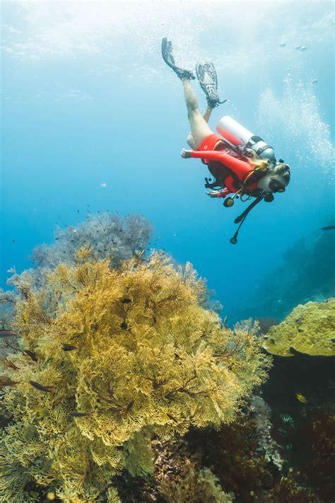 Raja At Dive - diving raja at with samambaia liveaboard the
