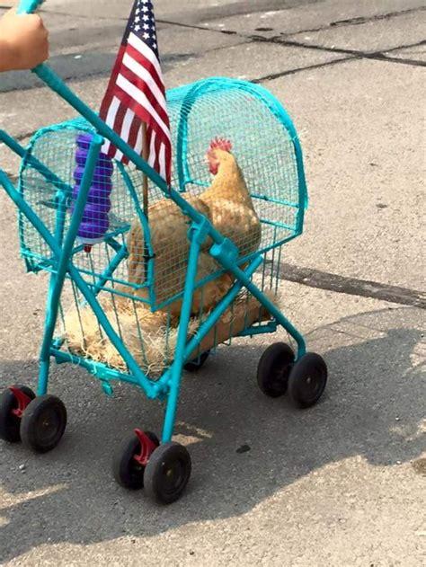 chicken stroller home design garden architecture blog