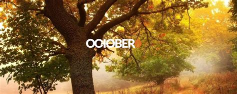 Creating a basic theme with October CMS | Industrial