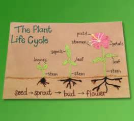 Plant Life Cycle Projects