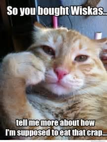 cat memes condescending cat meme weknowmemes