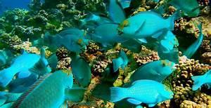 Aquatic Biology (EEMB) | UCSB Biology Undergraduate Program  Aquatic
