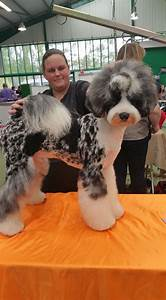 482 best images about dog grooming looks styles on pinterest With dog boarding and grooming