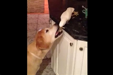 Bird Feeding Dog Noodles