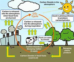 carbon cycle C - Effects of fossil fuels on the climate ...