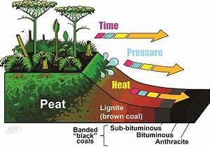 Coal Diagrams For Download  Kentucky Geological Survey  University Of Kentucky