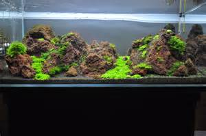 lava rock aquarium hahas awesomeness pinterest