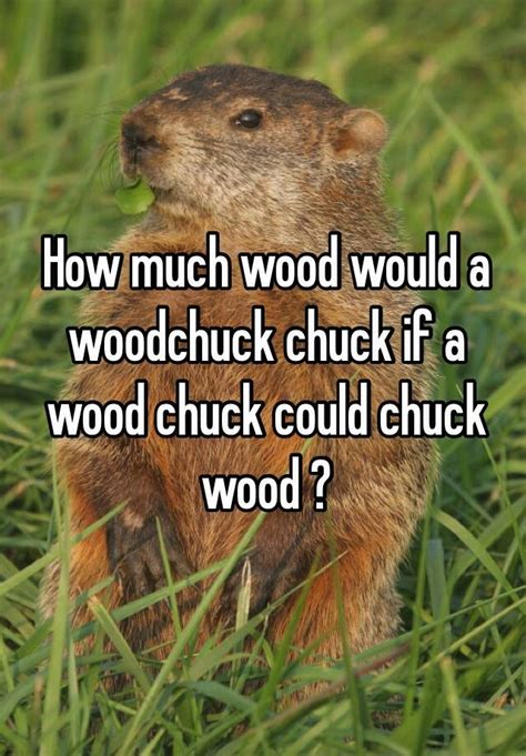 How Much Wood Would A Woodchuck Chuck If A Wood Chuck