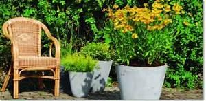 Plantes Grimpantes Pot Pour Terrasse : fiche conseil plantes shopping plantation d 39 une plante ~ Premium-room.com Idées de Décoration