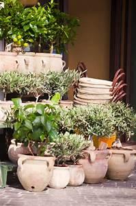 Winter Ohne Heizung : heizung f r den olivenbaum braucht er eine im winter ~ Michelbontemps.com Haus und Dekorationen