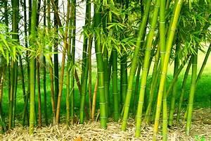 Bambus Vernichten Tipps : bambusparkett worauf sollte ich achten wohnungs ~ Whattoseeinmadrid.com Haus und Dekorationen