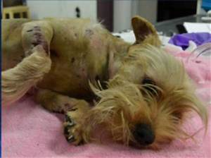 Man who lit puppy on fire sentenced to jail • Pet Rescue ...