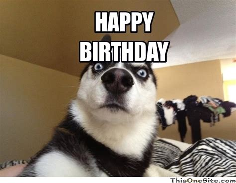 Www Memes Org - incredible happy birthday memes for you top collections