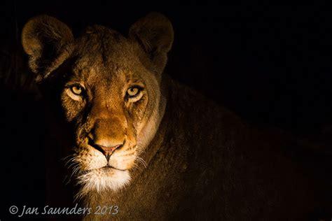 Low Key Wildlife Photography