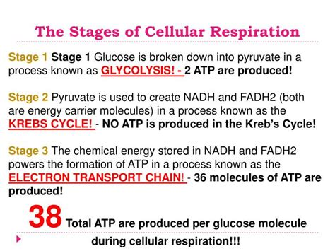 ppt energy transformations photosynthesis cellular respiration powerpoint presentation id